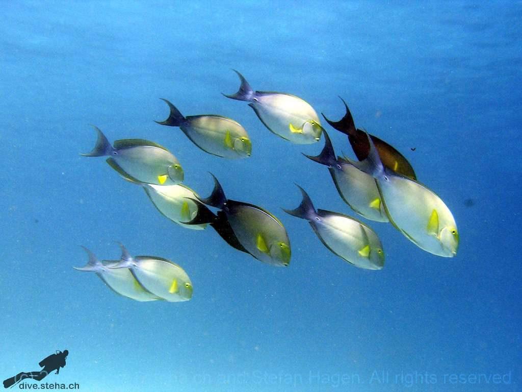 Fiji2002_b-1024x768