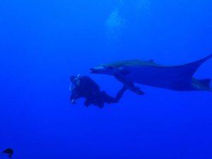 Grossfische (Mobulas) auf Santa Maria 2007