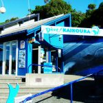 ein Dive Center in New Zealand